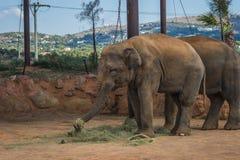 走在草坪,希腊的两头大象 免版税图库摄影