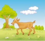 走在草甸的山羊 免版税库存照片