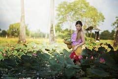 走在莲花领域的亚裔美丽的妇女 免版税库存图片