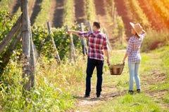 走在葡萄园里的年轻夫妇后面看法  免版税库存照片