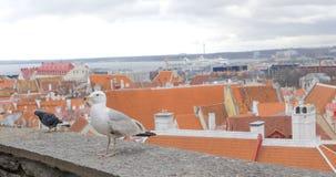 走在观察台的海鸥在老塔林 股票录像
