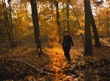 走在金子秋天森林健康生活方式概念 免版税库存图片