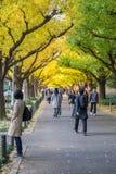 走在银杏树树下的许多人民在Icho Namiki大道 免版税库存照片