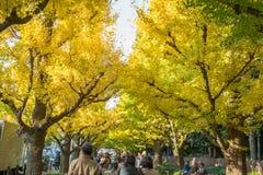 走在银杏树树下的许多人民在Icho Namiki大道 免版税图库摄影