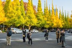 走在银杏树树下的许多人民在Icho Namiki大道 库存照片