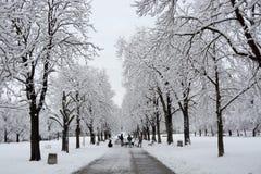 走在降雪期间的人们在公园在索非亚,保加利亚, 2014年12月29日 库存照片