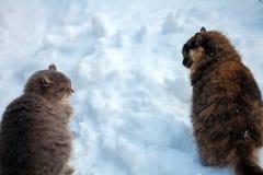 走在雪的两只猫 免版税库存照片
