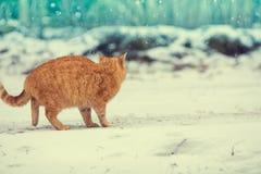 走在雪的小猫 免版税库存照片