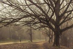 走在雾的自然 库存图片