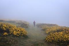 走在雾 免版税图库摄影