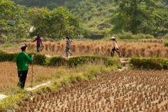 走在领域的农夫 免版税图库摄影