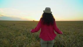 走在麦田的妇女游人在夏天日落 徒步旅行者帽子的旅客妇女有hikking本质上的背包的 女孩 影视素材