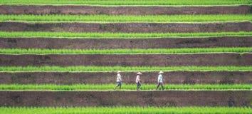走在巴厘语露台的米领域的工作者 库存图片