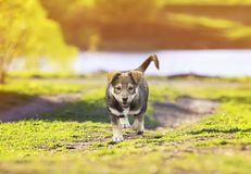 走在gre的一条小径的一只逗人喜爱的小的小狗的画象 图库摄影