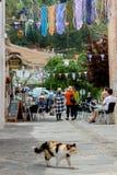 走在Pampaneira街道, Alpujarras,山脉Nev上的猫 库存图片