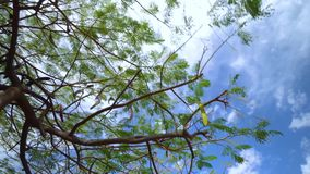走在Plam树下在特内里费岛 股票视频