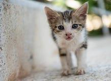 走在stairc的低角度观点的一只小的逗人喜爱的小猫猫宠物 免版税库存图片