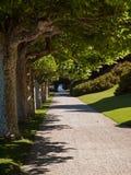 走廊结构树 免版税库存照片
