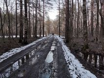 走森林的人们 免版税库存图片