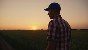 走横跨领域的农夫人在日落 影视素材