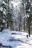 走沿一条多雪的森林公路的狗 库存照片