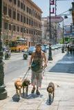 走沿一条拥挤的街的一个人在带领三条狗的巴勒莫 免版税库存照片