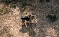 走沿含沙街道的小犬座 免版税库存照片