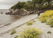 走沿有卵石花纹的海滩的人 库存照片