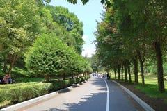 走沿柏油路的游人通过森林 免版税库存图片
