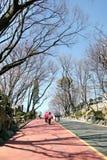 走沿车道的人们在Namsan公园 库存照片