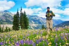 走男性的远足者在山的线索与在紫色和黄色的野花。 免版税库存照片
