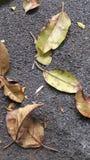 走的叶子  图库摄影