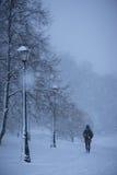 走的妇女在多雪的公园 库存图片