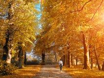 走的妇女在秋天公园 免版税库存图片
