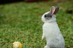 走的小的兔子在草坪 库存照片