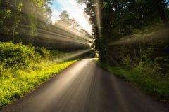 走的某人的概念一条艰难的路在生活中,但是光、幸福和救世向前在下曲线 库存照片