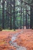 走的森林远足道路埃斯波兰萨,特内里费岛 免版税库存图片