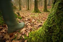 走的森林 库存照片