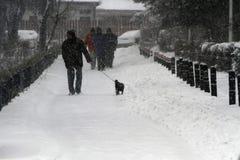 走的狗在冬天 库存照片