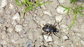 走的甲虫到另一个区域2 免版税库存照片