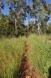 走的线索在Townsville 库存图片