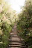 走的足迹到密林里 免版税库存图片