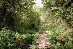 走的足迹到密林里 库存照片