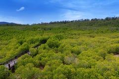 走的足迹在美洲红树森林里 库存图片
