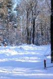 走的足迹在荷兰多雪的森林, Loenermark 免版税图库摄影