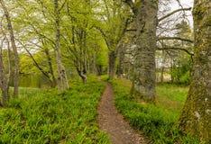 走的足迹通过森林 库存照片