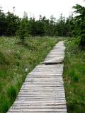 走的足迹通过沼泽 库存照片