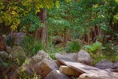 走的轨道在雨林国家公园在澳大利亚 免版税库存照片