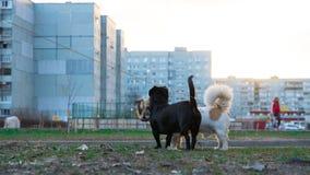 走的2条狗 库存照片
