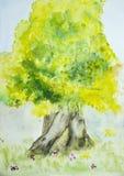 走的结构树 免版税库存图片